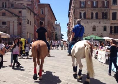 Passeggiata a cavallo in corso Vannucci a Perugia