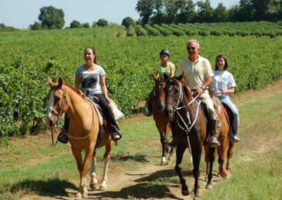 Passeggiate a cavallo a perugia tra i vigneti