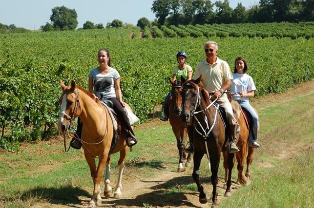 passeggiate a cavallo perugia nei vigneti